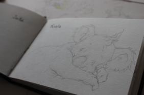 Koala Sketchbook