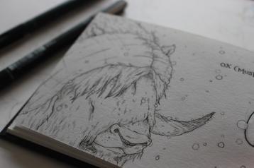 Musk Ox Sketchbook