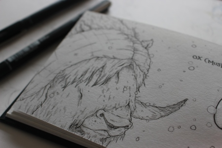Musk Ox Sketchbook