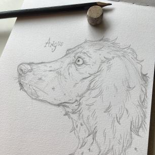 Angus 'my old friend'